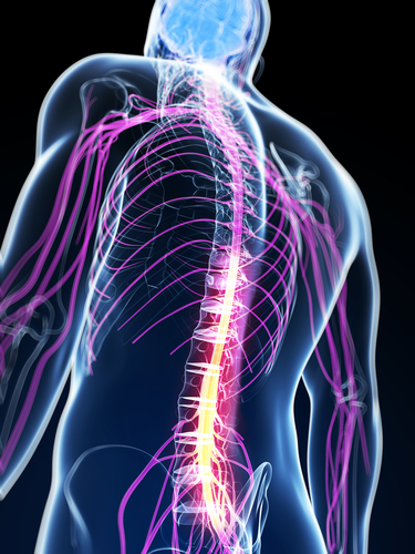 spinal cord_device